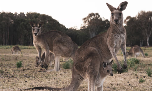 bus charter kangaroo island